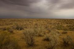 Kyzylkum desert (2)